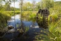 summer;woodland;green;Whitbarrow-Scar;Cumbria;UK;South-Cumbria;Foulshaw;nature-reserve;Cumbria-Wildlife-Trust;peat;peat-bog;raised-bog;wetland;bog;marsh;lowland;lowland-raised-bog;carbon;carbon-store;carbon-sequestration;climate;Foulshaw-Moss;tree;restoration;conservation;habitat;sphagnum;sphagnum-moss;pool;grass;sedge