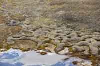 Spitsbergen-Svalbard-Arctic-Arctic-Circle-tundra-rock-stone-pebb
