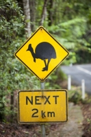 Australia;Queensland;Daintree;rainforest;woodland;trees;carbon-sink;environment;Daintree-rainforest;tropical;road;road-sign;warning;Southern-Cassowary;Cassowary;bird;crossing