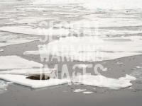 Svalbard-Spitzbergen-North-North-Pole-Arctic-Arctic-Ocean-sea-oc