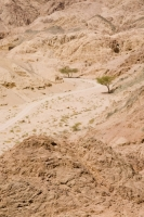 Egypt;Sinai;desert;sinai-desert;Dahab;Red-Sea;resort;coast;arabic;arab;heat;hot;dry;drought;mountain;hill;rock;rocky;geology;climate-change;global-warming;dusty;climate-shift;desertification;ridge;erosion;eroded;plant;drought-resistant;growth;growing;adapted;adaptation;survive;survival;tree