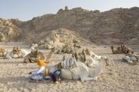 Egypt;Sinai;desert;sinai-desert;Dahab;Red-Sea;animal;mammal;Camel;beast-of-burden;arab;arabic;nomad;nomadic;desert-dweller;Bedouin;culture;wealth;caravan;tourism;tourist-trade;trip;camel-ride;domesticated;trek