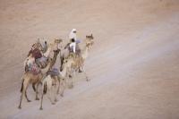 Egypt;Sinai;desert;sinai-desert;Dahab;Red-Sea;animal;mammal;Camel;beast-of-burden;arab;arabic;nomad;nomadic;desert-dweller;Bedouin;culture;wealth;caravan;child