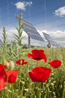 Spain;Andalucia;solar;solar-power;power;power-station;electricity;solar-power-station;climate-change;global-warming;energy;clean;clean-energy;green;green-energy;climate-friendly;carbon-footprint;carbon-neutral;environment;sun;sun-power;suns-energy;solar-energy;renewable;renewable-energy;technology;infrastructure;investment;green-investment;future;sunlight;PV;photo-voltaic;solar-panel;Caravaca;Murcia;wild-flowers;flower;Spring;poppy;red