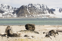 Smeerenburg-79°44'n-011°04'e-Albert-1-Land-on-Spitzebergen;Svalbard-whale-whaling-blubber-oven-clay-remains-artefact-histor