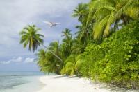 coral-coral-reef-coral-atol-reef-sea-ocean-Pacific-Pacific-ocean;Tepuka-Island;uninhabited;tilt;tilting;lean-leaning;Robinson-Crusoe;beach;coral-sand;white-sand;bird;flight;flying;wing;feathers;Tern;White-Tern