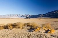 California;USA;America;Death-Valley;desert;drought;hot;dry;low;heat;National-Park;preserved;protected;mud-cracks;lake-bed;dessicated;barren;mountain;mountain-range;geology;rocks;sand;sandy;tumble-weed;tumbleweed