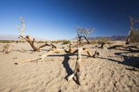 California;USA;America;Death-Valley;desert;drought;hot;dry;low;heat;National-Park;preserved;protected;mud-cracks;lake-bed;dessicated;barren;mountain;mountain-range;geology;rocks;sand;sandy;tumble-weed;tumbleweed;tree-dead;sand-dunes;Mesquite-Falt