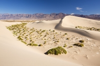 California;USA;America;Death-Valley;desert;drought;hot;dry;low;heat;National-Park;preserved;protected;mud-cracks;lake-bed;dessicated;barren;mountain;mountain-range;geology;rocks;sand;sandy;tumble-weed;tumbleweed;sand-dunes;Mesquite-Falt;ripples;ripple-marks;sand-ripples;crest;dune-crest;windswept;wind;movement;wind-erosion