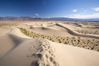 California;USA;America;Death-Valley;desert;drought;hot;dry;low;heat;National-Park;preserved;protected;mud-cracks;lake-bed;dessicated;barren;mountain;mountain-range;geology;rocks;sand;sandy;tumble-weed;tumbleweed;sand-dunes;Mesquite-Falt;ripples;ripple-marks;sand-ripples;crest;dune-crest;windswept;wind;movement;wind-erosion;footsteps
