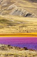 South-America;Bolivia;La-Paz;Huayna-Potosi;El-Alto;mountain;altitude;high;glacial-retreat;climate-change;global-warming;mountain-range;Cordillera-Real;Altiplano;water-supply;grass;grassland;reservoir;water-supply;low;drought;Laguna-Miluni;Miluni;colour;colourful;iron;iron-staining;red;orange;pink;purple;discoloured;mining;mine-effluent;polluted;pollution;contaminated;Lama;flock