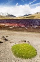 South-America;Bolivia;La-Paz;Huayna-Potosi;El-Alto;mountain;altitude;high;glacial-retreat;climate-change;global-warming;mountain-range;Cordillera-Real;Altiplano;water-supply;grass;grassland;reservoir;water-supply;low;drought;Laguna-Miluni;Miluni;colour;colourful;iron;iron-staining;red;orange;pink;purple;discoloured;mining;mine-effluent;polluted;pollution;contaminated;drought;green;vegetation